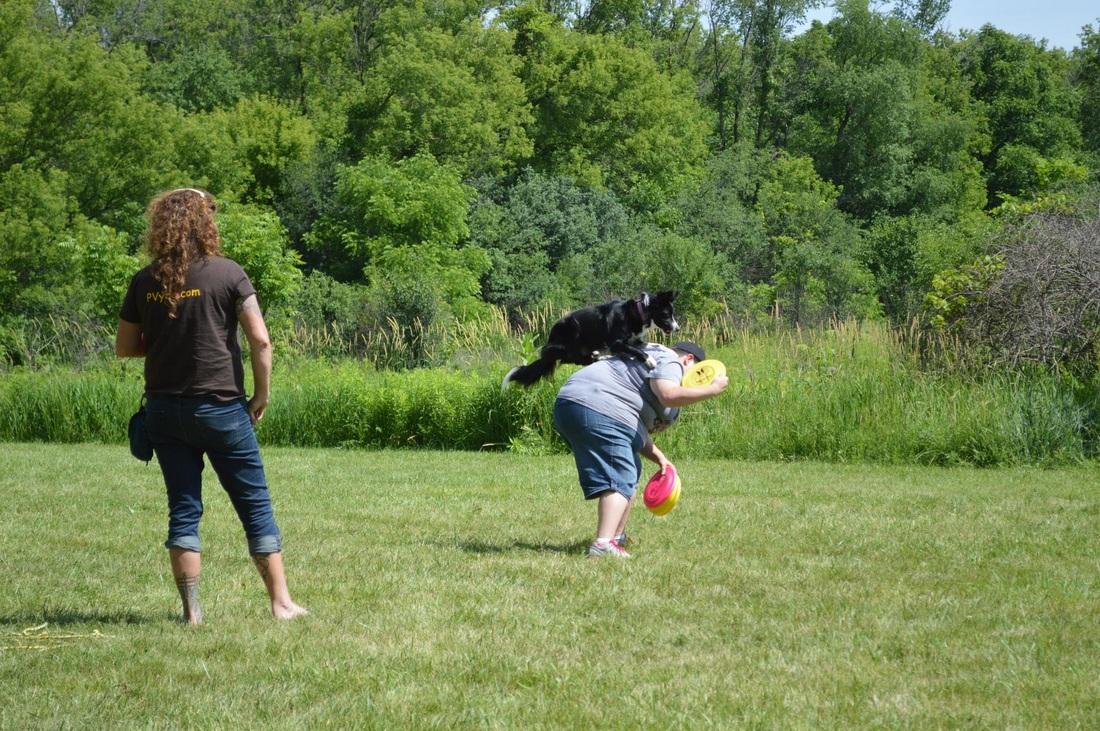 Dog Agility Training Naperville Il